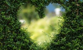 Zöld szív