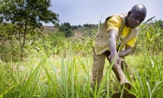 mezőgazdaság_afrika