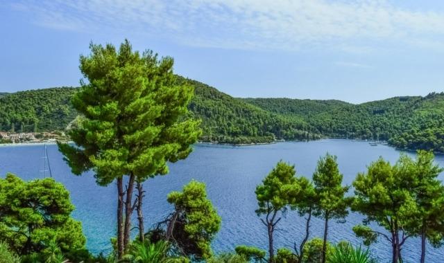 mediterrán erdő